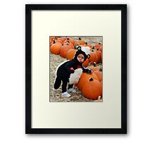 skunk in the pumpkin patch Framed Print