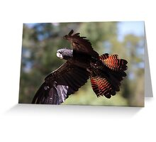 Red-tailed Black-Cockatoo Greeting Card