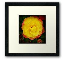 Mini rose in two tone Spring 2009 Framed Print
