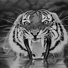 Roar by Istvan Natart