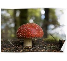 Toadstool - New Zealand Poster