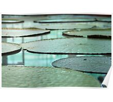 Amazon lillypads Poster