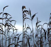 In The Reeds by Sally J Hunter