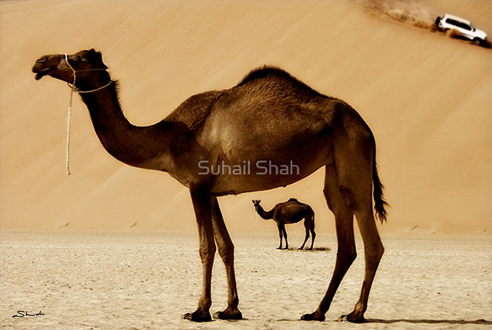 Camels and 4X4 Drive by Suhail Shah