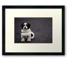 Black and white cookie Framed Print
