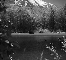 Mount St. Helens trail by Harv Churchill