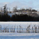 Winter Landscape- Keene Ontario Canada by Tracy Faught
