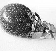 Passion fruit by Susana Weber