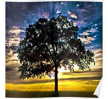 Morning Glory - Tree in a beautiful sunset Poster