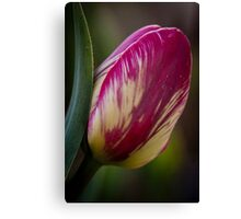 Tulips, Washington State Canvas Print