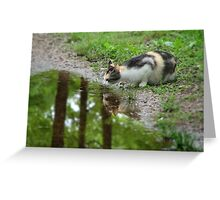 Callie Cat, Taking Advantage Of The Spring Puddle Greeting Card