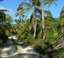 Sian Ka'an road by tanmari