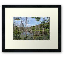 1549-XL-My Swamp Sweet Swamp Framed Print