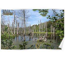 1549-XL-My Swamp Sweet Swamp Poster