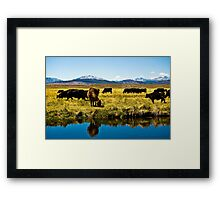Cows of the Sierras Framed Print