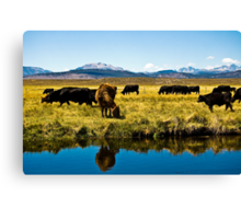 Cows of the Sierras Canvas Print