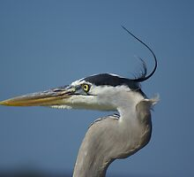 The Great Blue Heron by enyaw