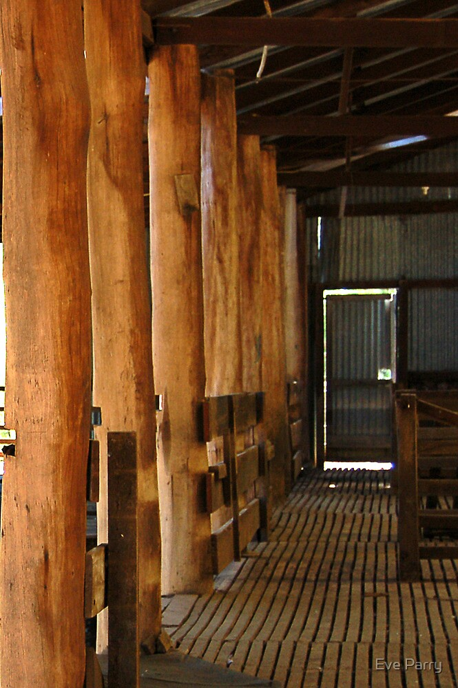 Shearing Shed - Frankland, Western Australia by Eve Parry