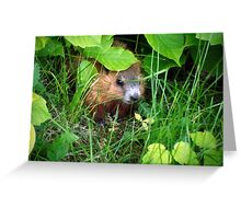 Cute Shy Peek a Boo Baby Groundhog  Greeting Card