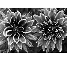 November Frost Photographic Print