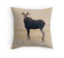 "Nice Young Bull Moose...""I'm a Handsome Dude"" Throw Pillow"