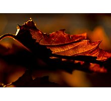 An Early Autumn Morning Photographic Print