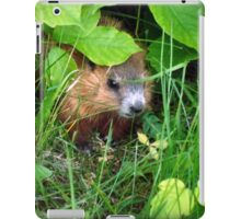 Cute Shy Peek a Boo Baby Groundhog  iPad Case/Skin