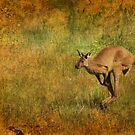 Australia by Julie Thomas