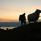 Man and sheep  by christopher363