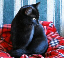 Bella - A Tail of Three Kitties - Part 3 by worldtripper