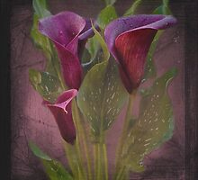 Calla Lilies by Lissywitch