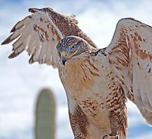 Royal Hawk  by Judy Grant