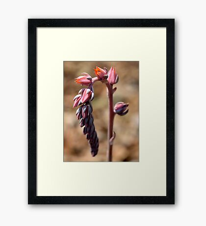 A matter of time..... Framed Print