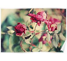 Winter Roses Poster