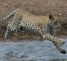 Leap by christopher363