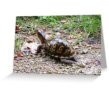 Box turtle Greeting Card