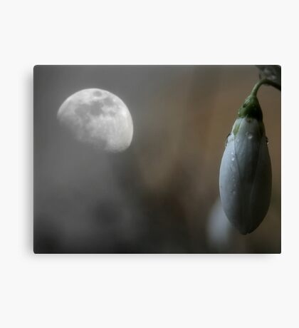 Growing Through the Night Canvas Print