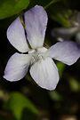 Spring Blooms by Allen Lucas