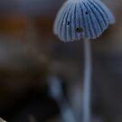 Mushrooms have feelings too by Raychel