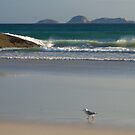 Evening Stroll, Wilsons Promontory by johnrf