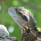 """""""What's for brekky?"""" Asks my pet lizard. by Frandiana"""