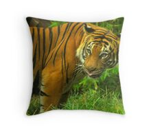 Here Kitty, Kitty Throw Pillow