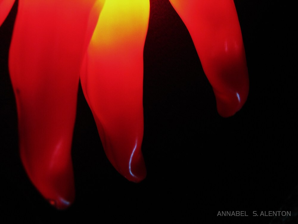 lighted chili by ANNABEL   S. ALENTON