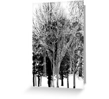 Gray-scale Forest Greeting Card