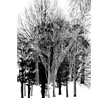 Gray-scale Forest Photographic Print