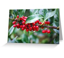 Red, Red Berries of the Holly Tree Greeting Card