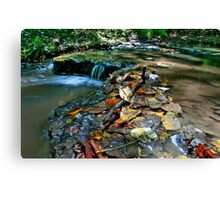 Up Stream Canvas Print