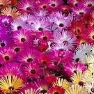 Spring Flowers on Parade, Napier, New Zealand by Tony Walker