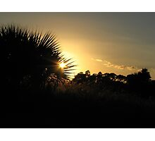 Sunset at the pasture Photographic Print