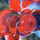 Ornamerntal Plum by Heather Lara